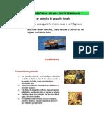 Características de Los Invertebrados