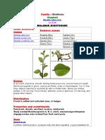 27207888 Family Basellaceae Alugbati Basella Rubra Linn