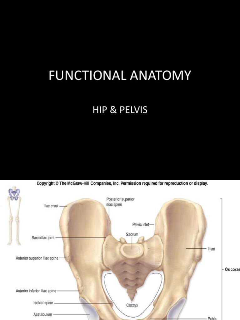 HIP & PELVIS-functional Anatomy