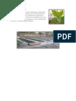El control fitosanitario.docx