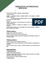 ACCIÓN E INSERCIÓN DE LOS PRINCIPALES MÚSCULOS