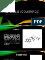 Esteroles (Colesterol)