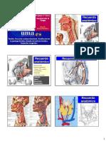 025_Patología tiroidea.pdf