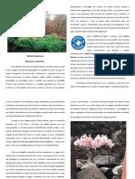 Os Direitos Humanos - Voluntariado Missão Esperança.pdf