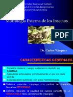 Morfología Externa de Los Insectos (1)