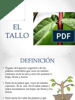 EL TALLO-1516063840.pptx