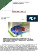 Pești