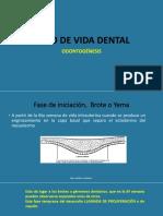 5. Ciclo de Vida Dental