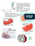 Doc1 bio