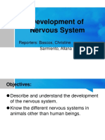 08-Development of Nervous System
