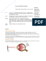 The Main Parts of the Eye and Their Function