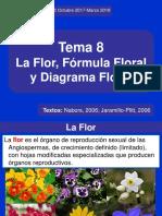 Flor-Fórmula y Diagrama floral