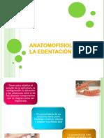 anatomofisiologadelaedentacin-160127092137
