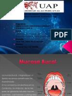 Histologia Oral, Esmalte Dentina
