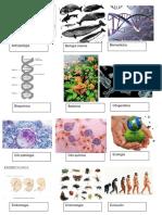 Antropología, Biología Marina, Biomedicina, Botanica, Citogenetica, Citopalogía, Ecología, Embriología, Entomología, Evolución, Folgenia Etc Imagenes
