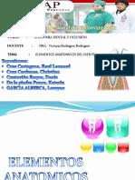 Gp3) Elementos Anatomicos de Un Diente
