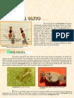 mosca_olivo.pdf