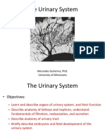 SLIDES - Urinary System 2016