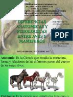 ANATOMIA expocicion.pptx