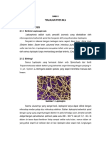 BAB II leptospirosis fix.docx
