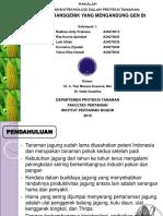 jagung-transgenik.ppt