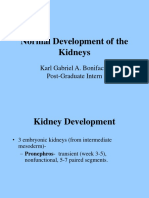 Normal Development of the Urogenital System