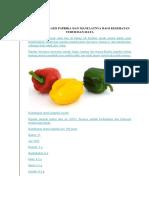 Kandungan Gizi Paprika Dan Manfaatnya Bagi Kesehatan Tubuh Dan Mata