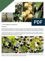 Manual Técnico Completo Sobre El Cultivo Del Maqui