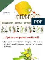 Presentación Jacqueline Stuardo - 3 Herbario