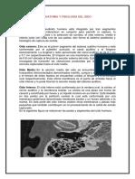 ANATOMÍA Y FISIOLOGÍA DEL OÍDO.docx