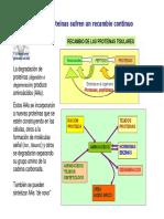 T13-reacciones.pdf