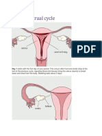 The Menstrual Cycle Assignment in Biology
