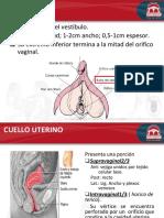 Anatomia y Mecanismo de Parto (1) (2)