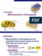 2. Mitochondria and Chloroplasts