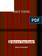 TRACE FOSSIL1.ppt