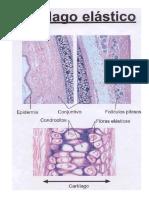 Practica 5-Cartilago y Hueso.pdf