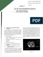 Labos Cap 2elementos de Neuroanatomia Para La Neuropsicologia