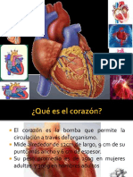 Corazon Anatómica