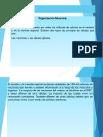 DIAPOSITIVA-DE-PSICOLOGIA-DE-APRENDIZAJE-ALEXANDRA (1).pptx