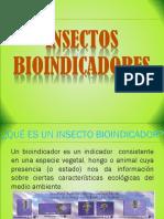 Expocisión Orden Plecóptera