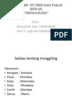 PPT trenggiling