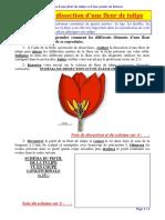 00 Fiche Dissection Fleur de Tulipe