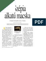 Dr. Pálinkás Imre_A Macskák Alkata_Szépia