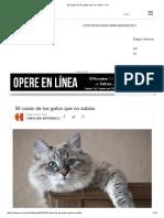 30 Cosas de Los Gatos Que No Sabías - VIX