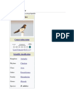 Pacific swallow.docx