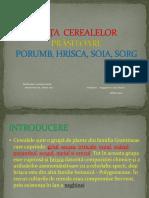 Politici Agricole Piata Cerealelor Prasitoare Porumb Sorg Hrisca Soia