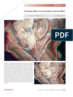 Relationships of the Temporal Bone to the Lateral Cranial Base