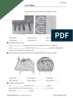Actividad de refuerzo 3º ESO T6- Oxford.pdf