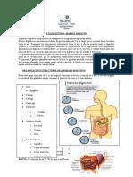 7c2b0 Sistema Digestivo