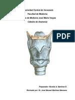 Guía Anatomía de Laringe